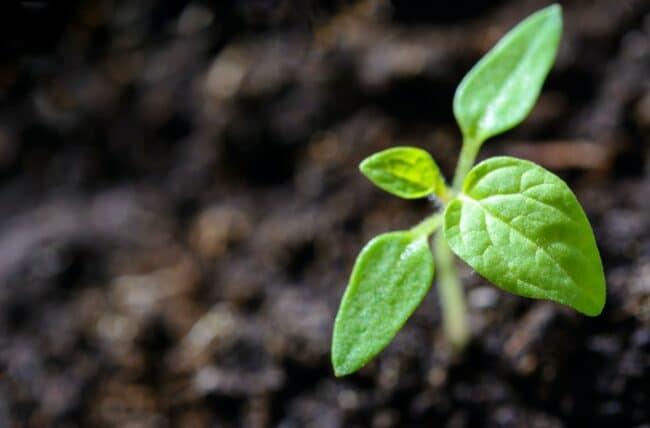 Comment planter selon le type de plante?