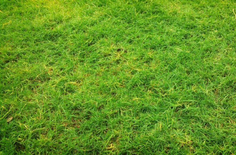 pelouse abimée