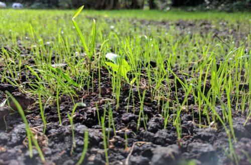 planter gazon