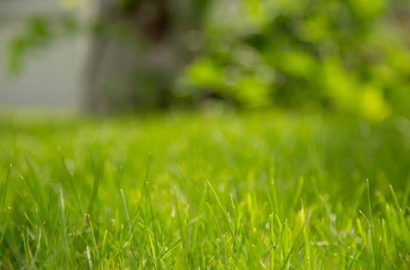 traiter les mauvaises herbes